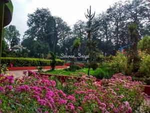 Nightangle Park